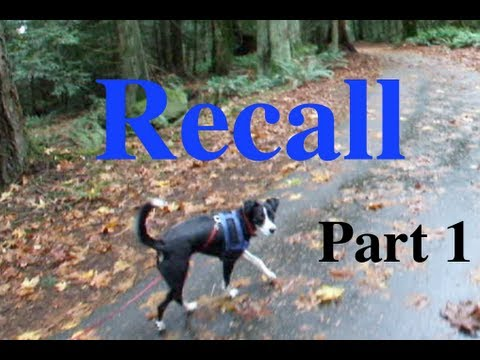 Shaping The Recall with Donna Hill Part 1