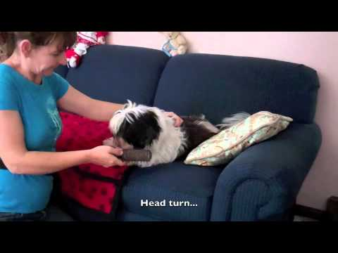Reconditioning a Grooming Sour Dog with Sarah Owings