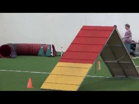 This Basset Flies Through Dog Agility
