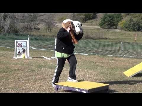 Jill Basset Gives Her Best in Dog Agility