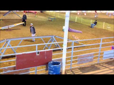 Gitchi Flies Away With QQ's At This Dog Agility Trial