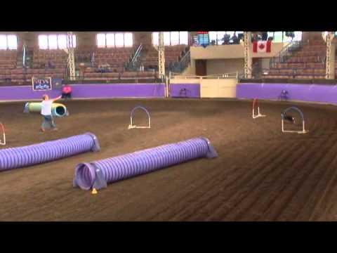 2013 NADAC Championships With Amanda & Try