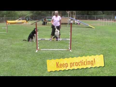 Hands Free Dog Agility Start Line Set Up