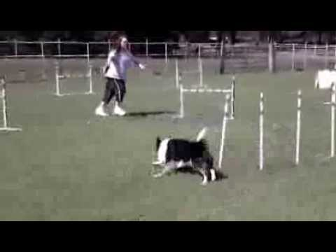 Dog Agility Weave Pole Exits and Serpentines