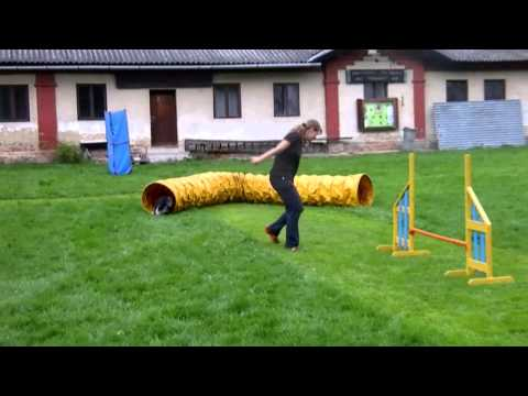 Dog Agility Serpentine Handling Options
