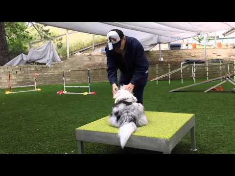 Getting Down on the Small Agility Dog's Level