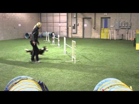 Exercises for Dog Agility Push Backs and Turns