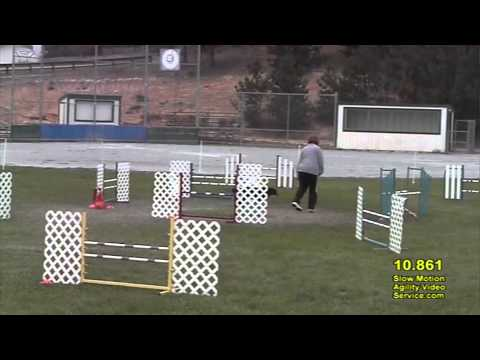 Dog Agility Interrupted Front Cross